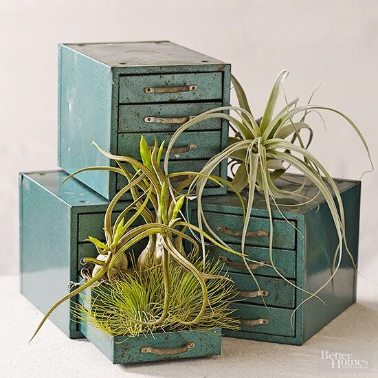 9 best air plants images on pinterest air plant display for Easy to take care of indoor plants