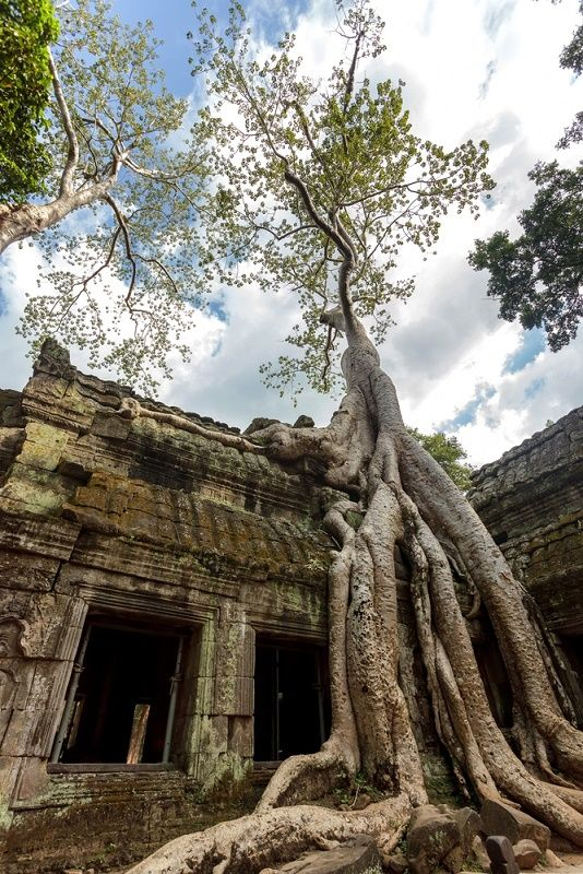 Ta Prohm Temple at Angkor in Siem Reap, Cambodia