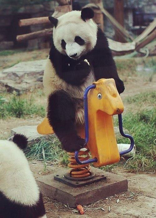 panda playin' on a plastic pony   well, shut the front ...
