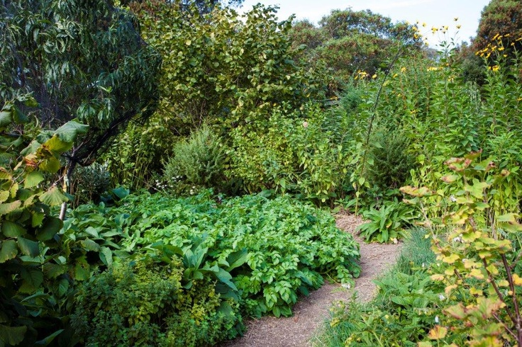 Part of the abundant food forest at St Erth