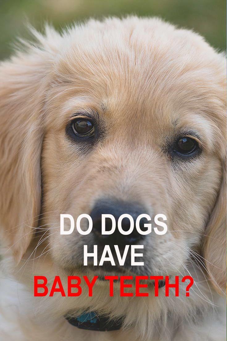Do Dogs Have Baby Teeth Dogs Having Babies Dogs Dog Anatomy