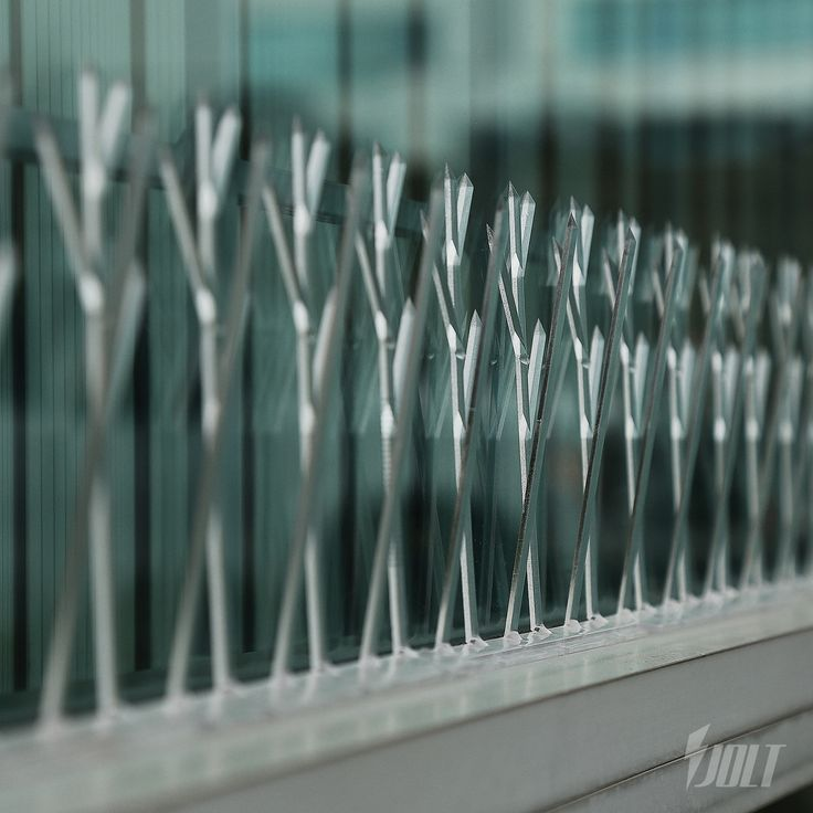 Bird Spikes - Control Spikes - Deterrent Spikes - Polycarbonate - 10 ft.