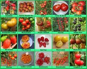 die besten 25 tomatensorten ideen auf pinterest tomatenanzucht pflanzen samen und tomaten. Black Bedroom Furniture Sets. Home Design Ideas