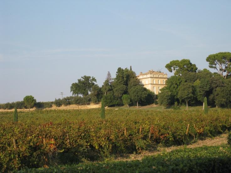 #vin Château La Nerthe in Châteauneuf-du-Pape