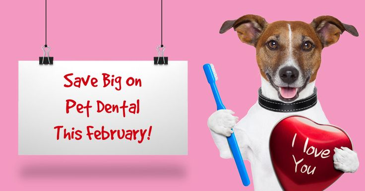 To celebrate National Pet Dental Health Month we're offering an awesome $80 value with all dental cleanings for limited time during January and February. This value includes: Free Fluoride Treatment, Free Post Procedure Laser Treatment, Free Bag of Prescripton Dental Diet Food, Free Toothbrush and Toothpaste Kit, and 25% off 2 Dental Radiographs! *While Supplies Last! ALSO....Wellness Rewards Members enjoy an additional 5% cash back on their rewards card!! Call now to set up your…