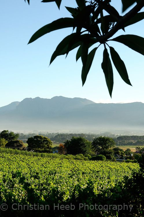 Vineyards at Grande Roche Relais  Chateaux Hotel, Paarl, Western Cape, South Africa