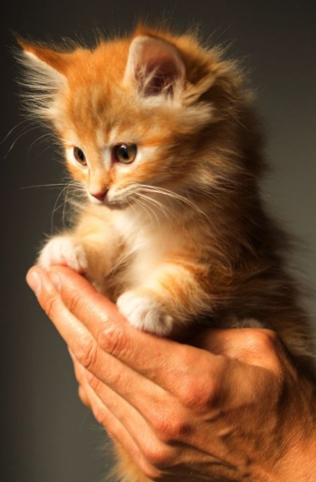 Outstanding Cute Cats And Dogs Hd Wallpapers Visit Kittens Cutest Cute Cats Cats