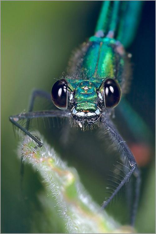 17 meilleures id es propos de dessin de libellule sur - Photo de libellule a imprimer ...