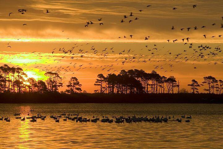 Pin by Katina Harmon on nature | Birds in flight, Sunset