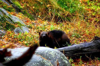 Satu Ylavaara CV: My photography. Animal photography. Valokuvaukseni. Eläinkuvat