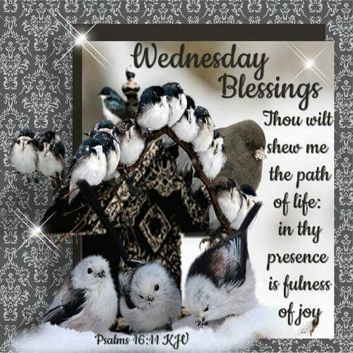Wednesday Blessings  wednesday wednesday quotes happy wednesday wednesday blessings wednesday image quotes wednesday quotes and sayings