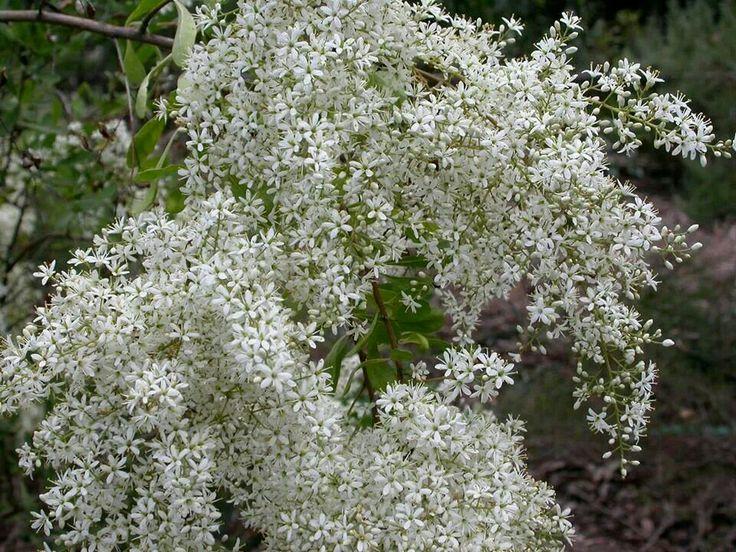 1762 Best Images About Australian Native Plants On