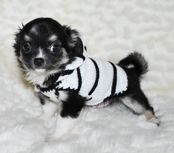 25 best ideas about chihuahua clothes on pinterest dog sweaters puppy sweaters and yorkie. Black Bedroom Furniture Sets. Home Design Ideas