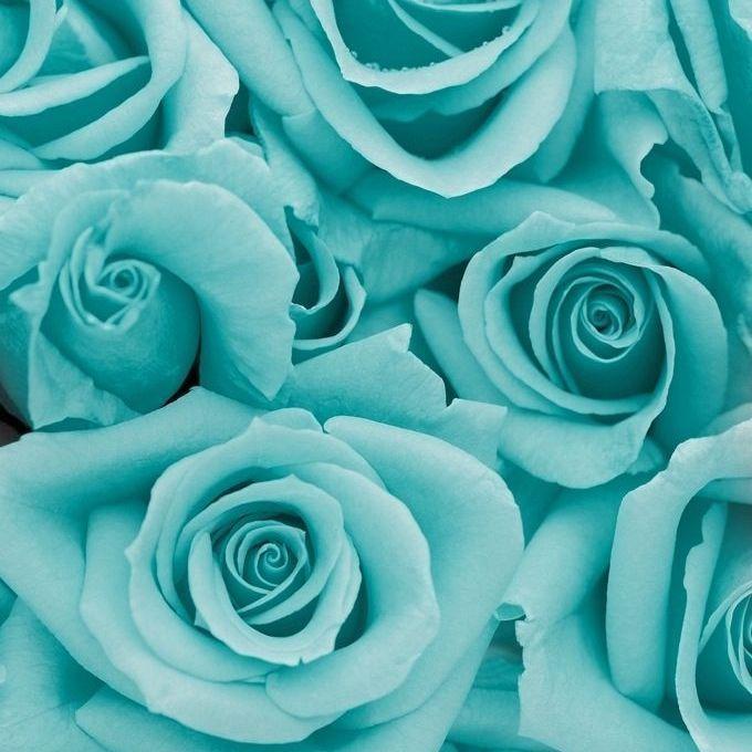 Цвет мяты в картинках