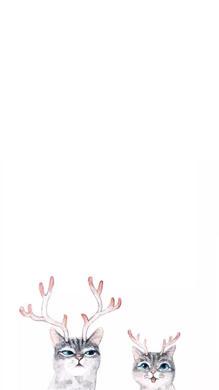 iPhone Wallpapers (Simple funny cat wallpaper)