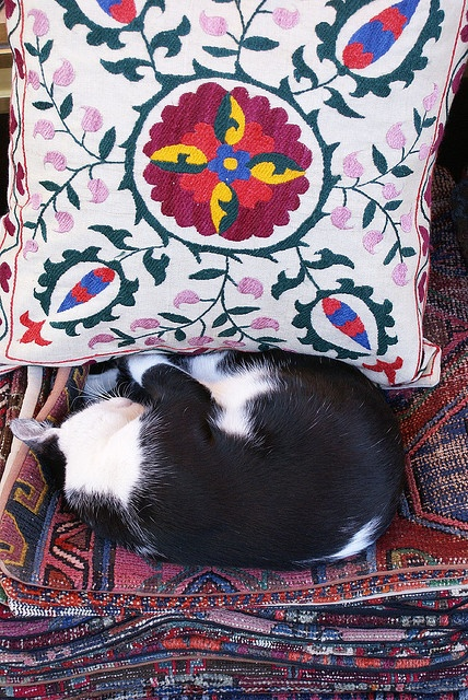 """I usually lie on the pillow; this one's too pretty."" -- To be a cat in Istanbul! by vera.stoynova, via Flickr"