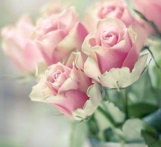 : Blushes Pink, White Rose, Vintage Pink, Colors Rose, Soft Pink, Pastel Pink, Pale Pink, Pink Rose, Colors Glasses