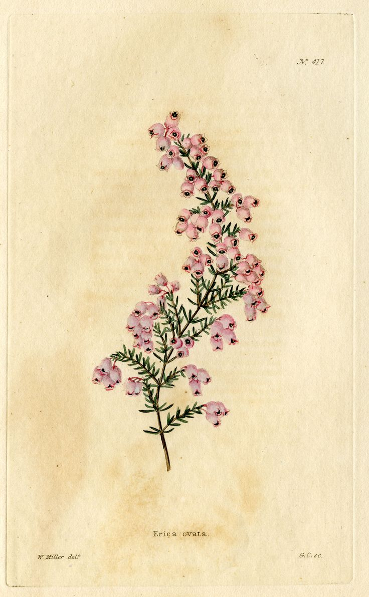 25 best ideas about vintage botanical illustration on for Botanical tattoo london