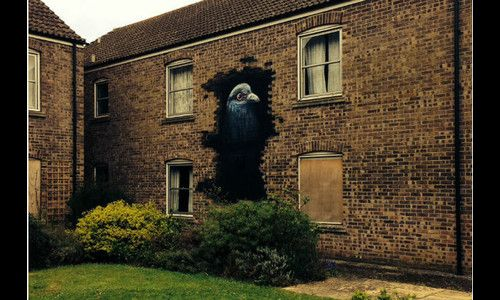 Street artist stuns neighbours as derelict building turns into menagerie