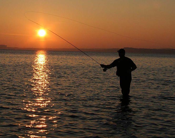 Lystfiskere efteraber vårfluen. Når lystfiskerne binder fluer til f.eks. at fange ørreder, så efterligner de vårfluens udseende. Når fiskerne så kaster linen ud, tror fiskene, at det en vårflue, der sidder på vandoverfladen, eller som er ved at lægge æg.