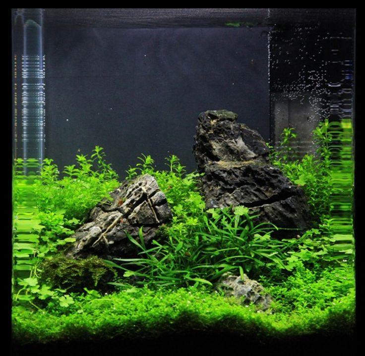 Aquascape Design 158 best aquascaping: nano aquariums images on pinterest