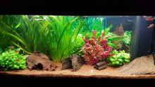 Aquarium Hauptansicht von Niedersachen