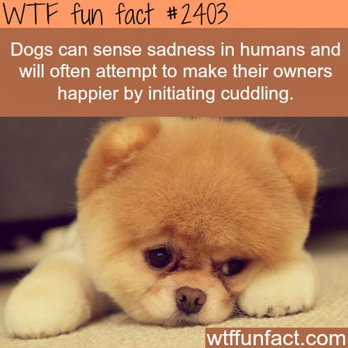 32 best images about Dog facts on Pinterest