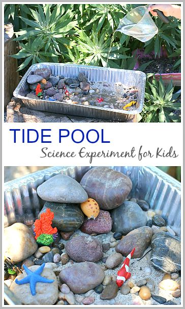 Tide Pool Experiment for Kids (& a fun ocean themed sensory bin when you're done!)~ Buggy and Buddy. Pinned by Learning and Exploring Through Play.