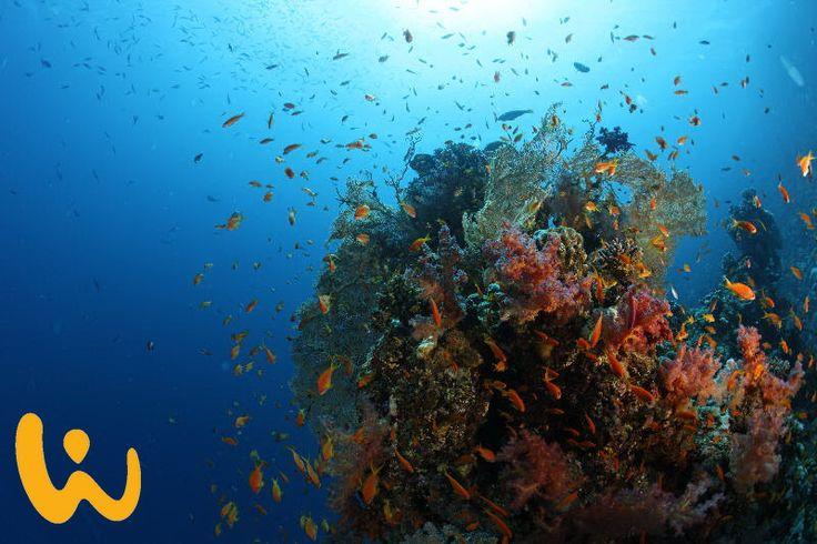 So viele Farben!! Die Unterwasserwelt im Roten Meer bietet eine unglaublich große Vielfalt an Farben. Erlebe Farben mal ganz anders!! #ägypten #tauchen #rotesmeer #wirodive #schnorcheln #farben #blauesmeer #ichliebemeinleben #unbeschreiblich #tauchsafari #erlebnisreise #wow #farbenpracht #sonne #meer #mehr #touchedbynature
