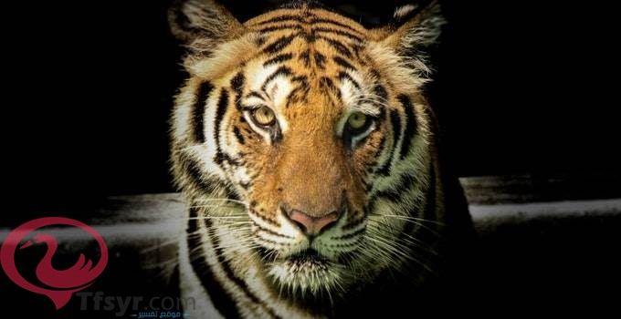 تفسير النمر في الحلم للامام الصادق 3 Tiger Pictures Wildlife Photography Animal Facts