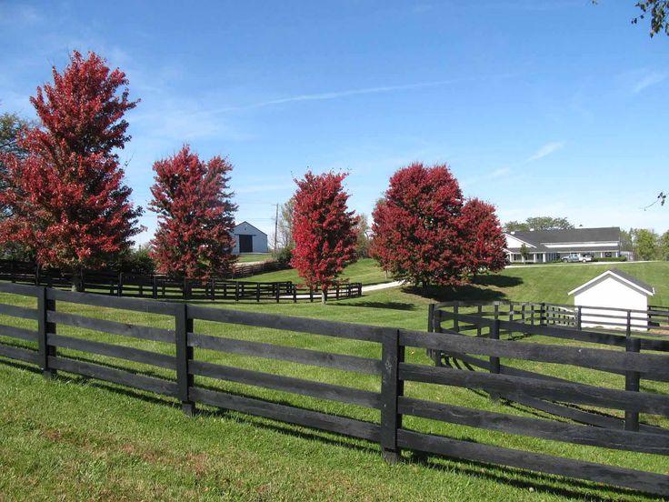 Farm fencing ideas google search