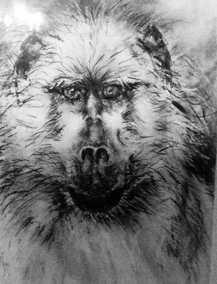 Baboon Pencil/turps Jean Weir
