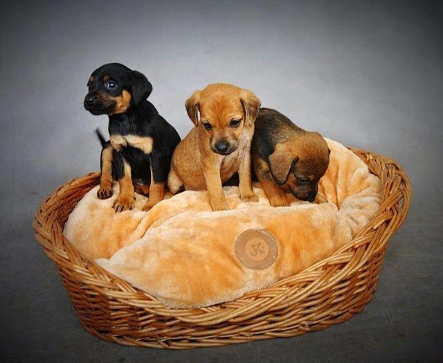 Potrzebujemy mokrej karmy dla szczeniąt! #dogs #shelter #help #puppy #poland