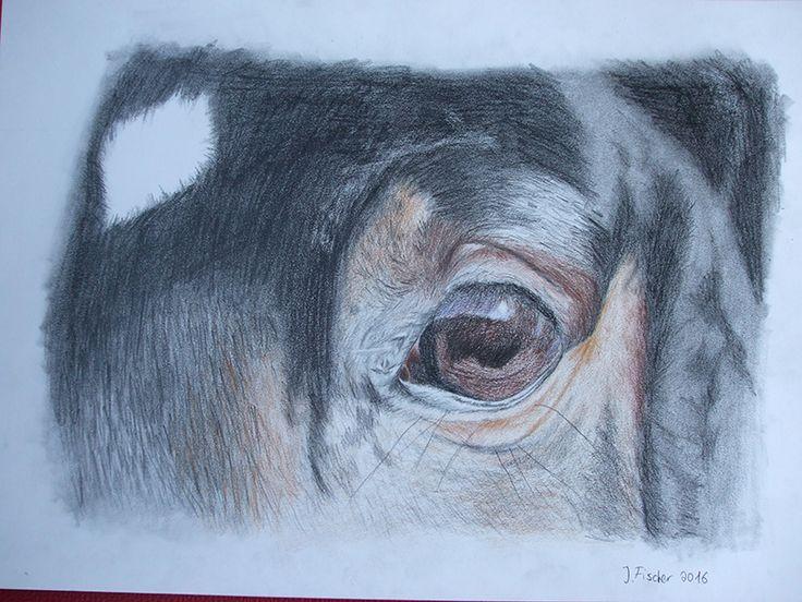Schon seit längerem habe ich überlegt mich an Buntstift heran zu wagen und kurzerhand habe ich einfach welche gekauft. Im Internet gibt es leider kaum Seiten, die erklären welche Techniken es gibt und was dabei zu beachten ist. Trotzdem habe ich frohen Mutes einfach mal angefangen zu zeichnen.   #Auge #Buntstift #Pferd #Zeichnung