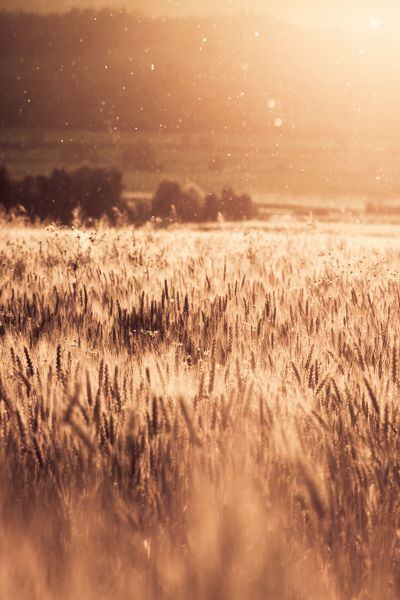 That was the real you, standing in fields of gold wide open...