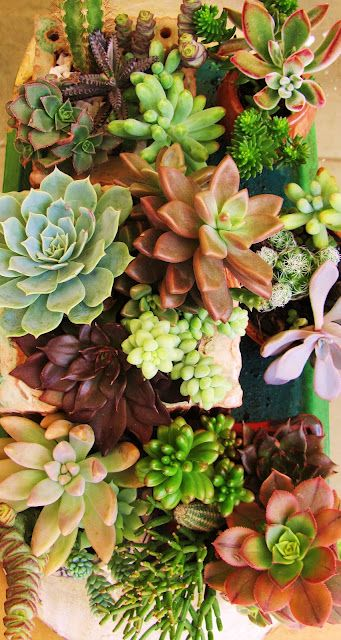 Succulents sooo pretty and easy to take care of !!