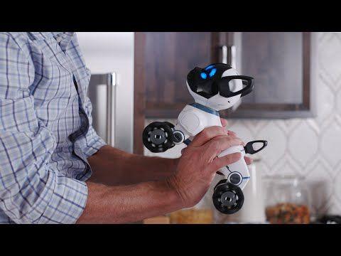 Poznaj CHiP'a – inteligentnego robo-psiaka | Intelidom