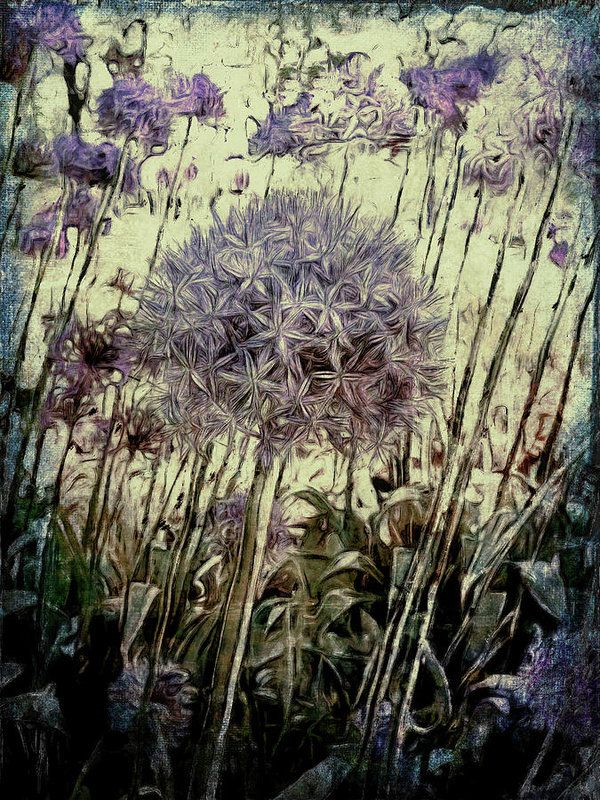 Allium Giganteum Art Print by Leslie Montgomery.  All prints are professionally printed, packaged, and shipped within 3 - 4 business days. Choose from multiple sizes and hundreds of frame and mat options.