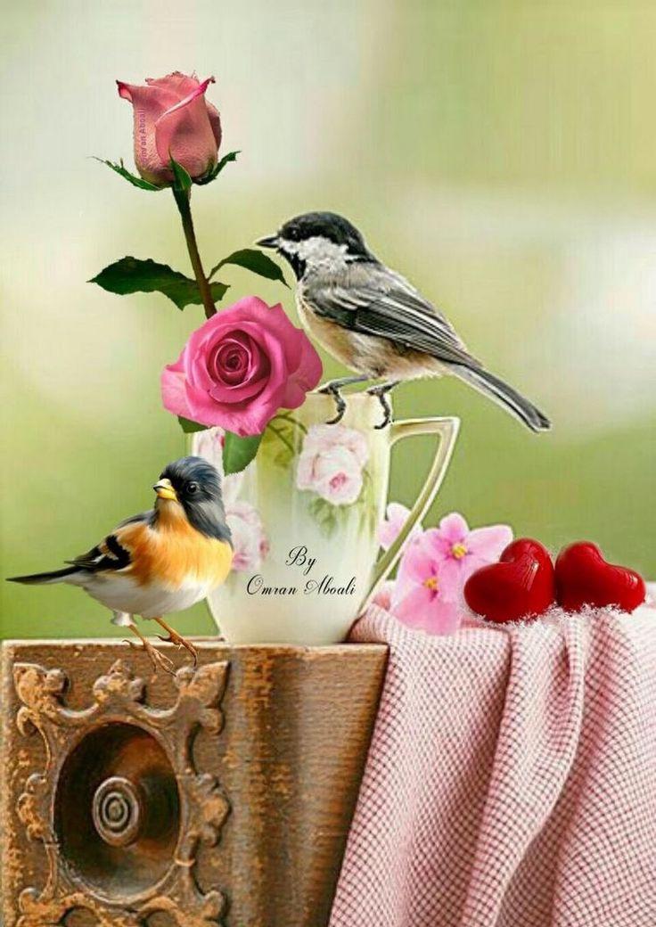 фотографии доброе утро картинки с птичками райскими свою работу