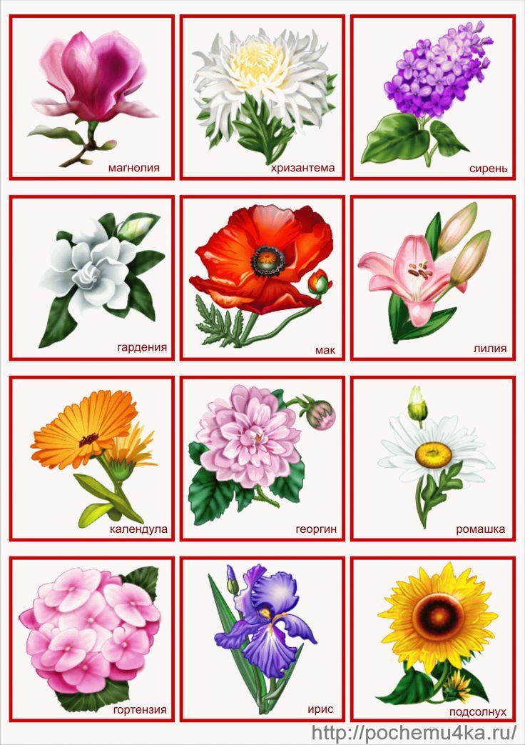 1000+ images about lotto on Pinterest | Kindergarten fun