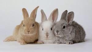 Drie konijnen die tegen elkaar aan liggen