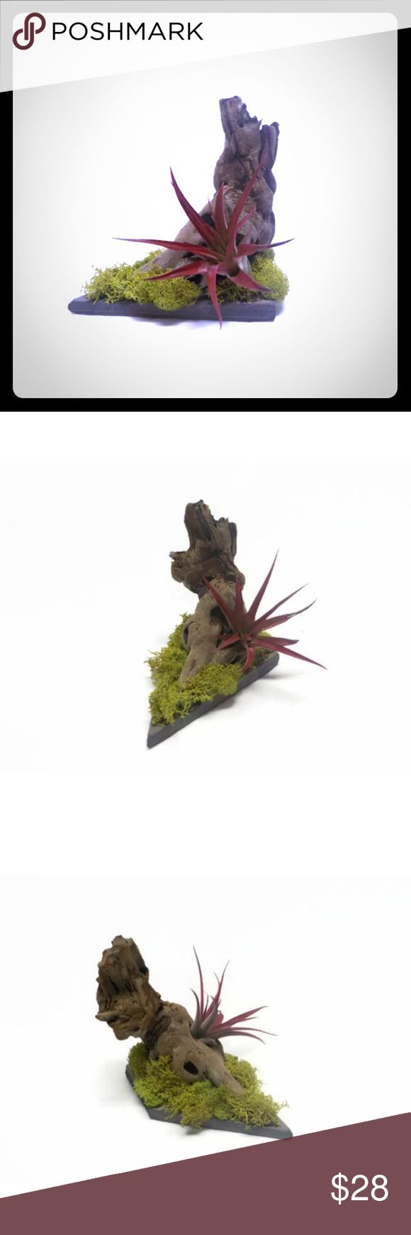Red Air Plant and Driftwood Decor Beautiful red tillandsia, green moss and rustic driftwood make this one of a kind air plant floral arrangement something to cherish.  It does require misting with water a few times per week in dry conditions.  The green decorative moss needs no care.  Care instructions included.  Feel free to message us if you would like to add a gift card or note.  The air plant, driftwood and decorative moss are adhered with plant safe glue.  This piece is 5 inches long, 3…