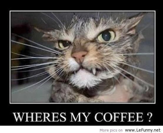 I really know that feeling: Check out this cat that is asking: Where's My Coffee? Want more #funny pictures? http://thespringmount6pack