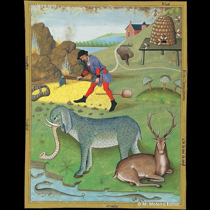 El Libro de los Medicamentos Simples. En el f. 168v se presentan los beneficios del hueso de corazón de ciervo, del espodio y de los stincs en salazón.