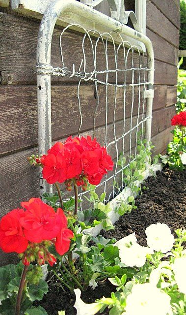 <3 old gate for climbing flowers ~ on mine I train my sweet smelling sweet peas to climb