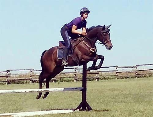 16h Event, Jumper or Pleasure mare  16h, 10 yr old Tb mare. Suitable for intermediate rider, has had younger teens ride her well. Grea