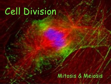 Cell Division Mitosis and Meiosis by Catherine Patterson, via Slideshare