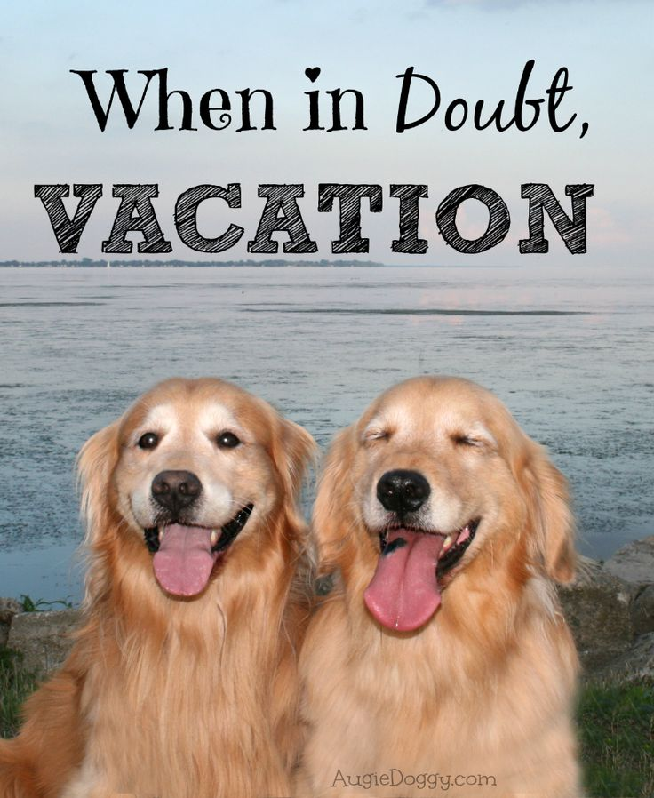 1000+ images about Golden Retriever Dog Quotes on ...