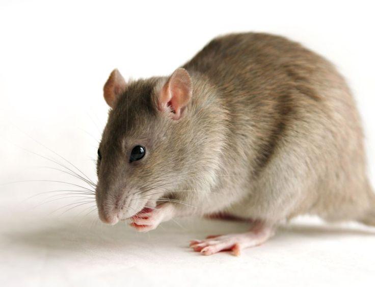 TIPS:Το κόλπο για να μην έχετε ποντίκια στο γκαράζ ή την αποθήκη