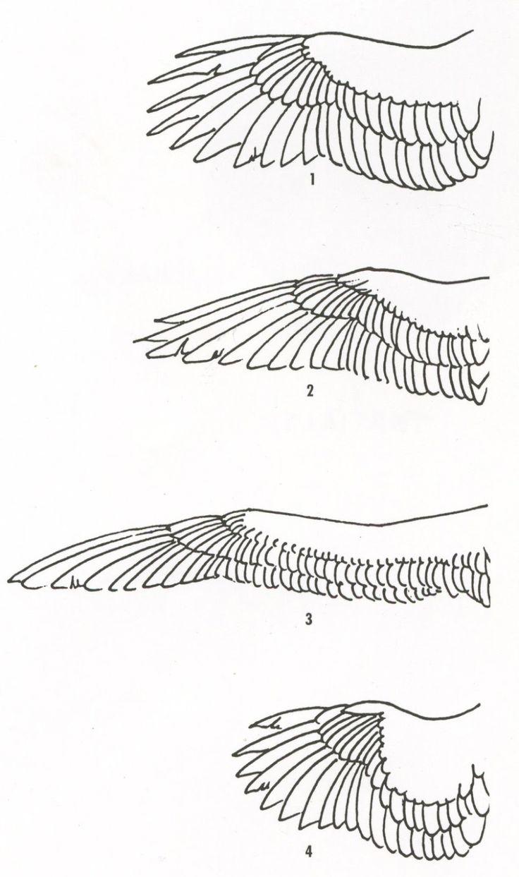 Set of sketches of flying swallows stock vector illustration - Wing Drawing Sandy Scott 1 Soaring Birds Hawks Eagles Ravens 2